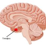 МРТ гипофиза с контрастом, что показывает?