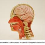 МРТ головы и шеи, что показывает